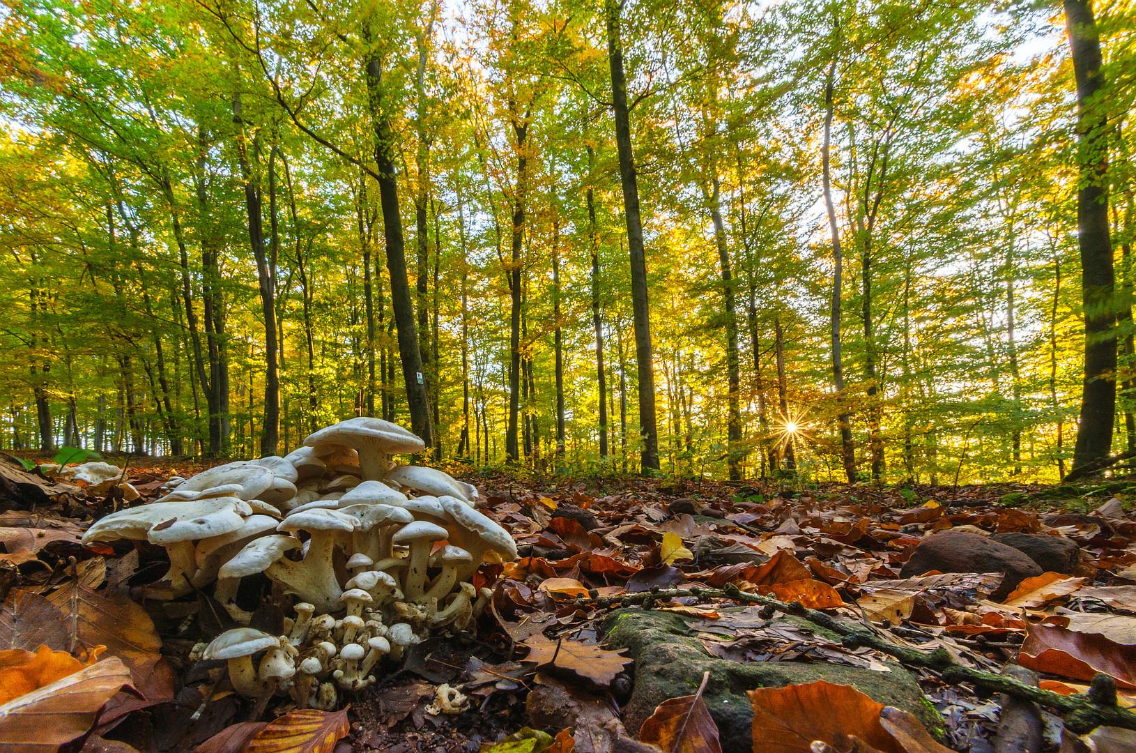 Herbstwald 2013 IV