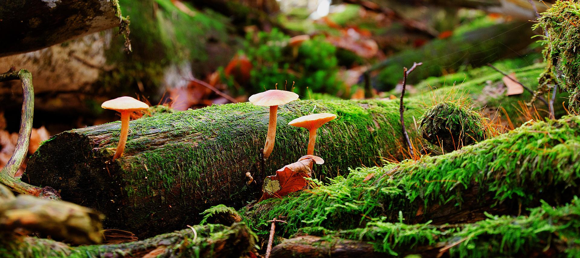 Herbstwald 2013 IX