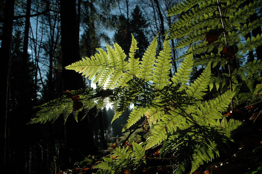 Herbstwald 3 ...