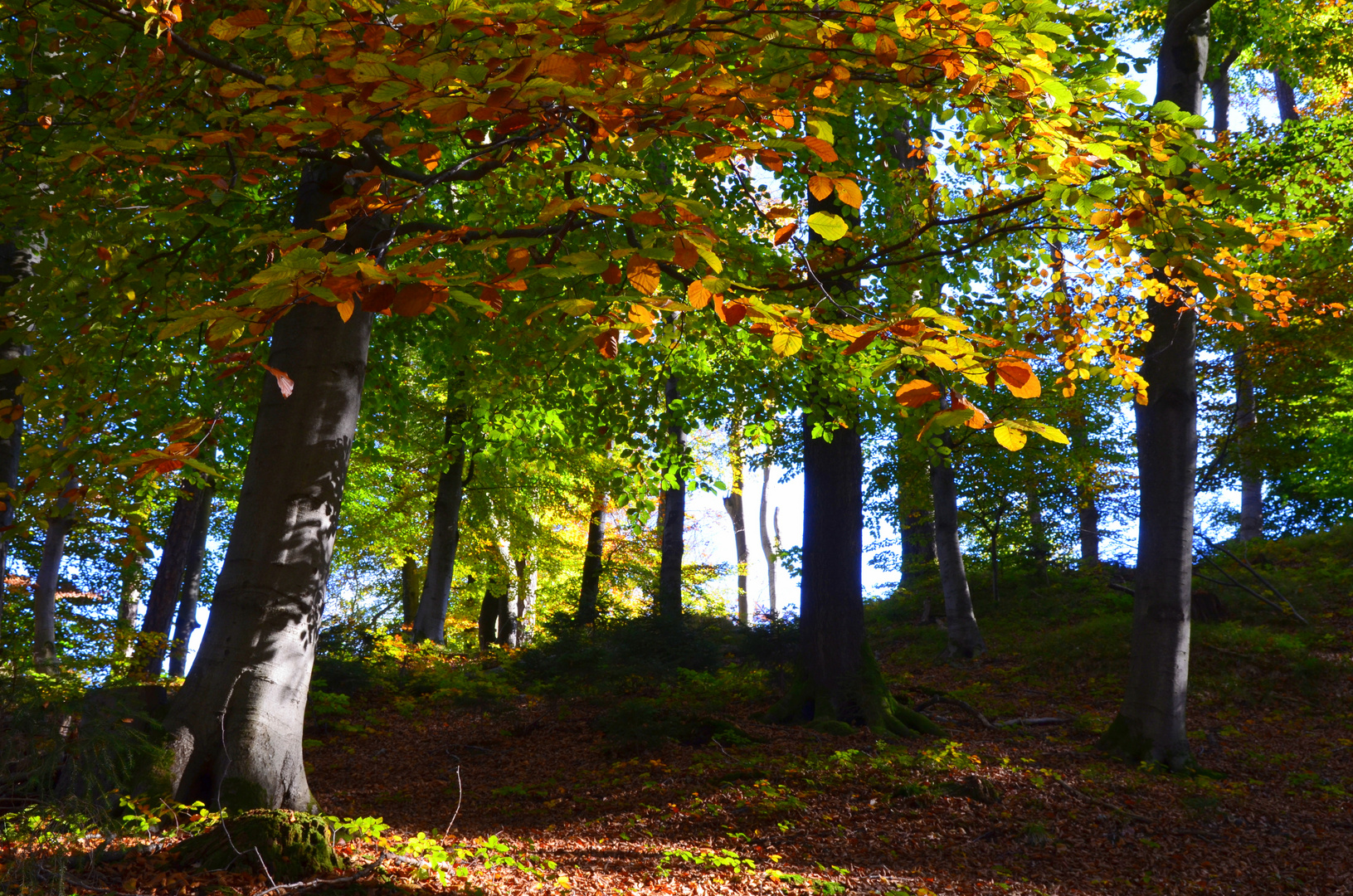 Herbstwald......