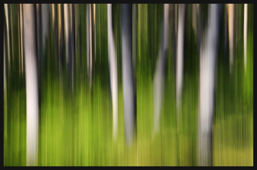 ... Herbstwald ...