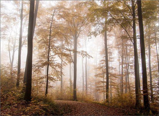 Herbstwald 4