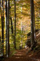 .Herbstwald