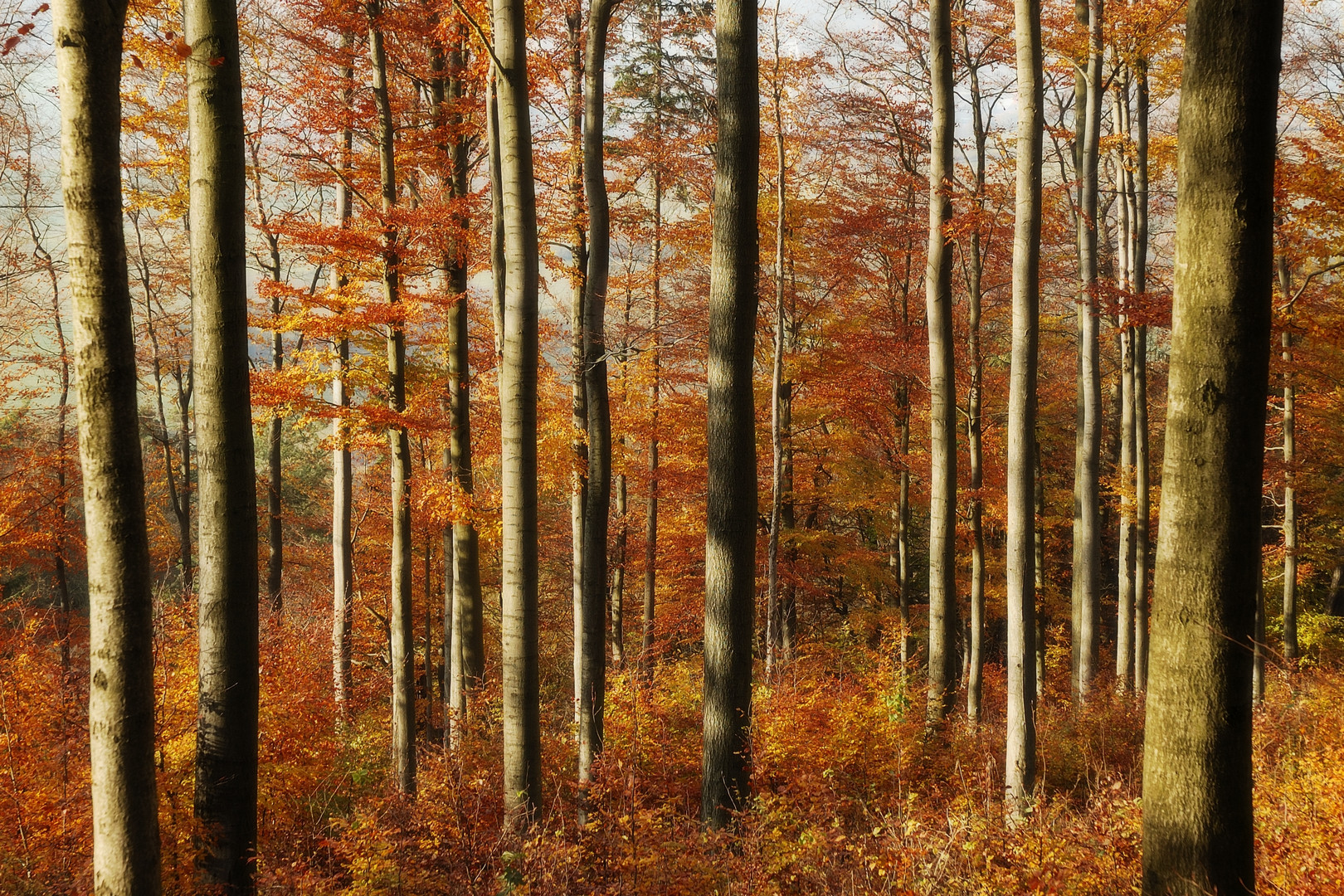 Herbstwald 6