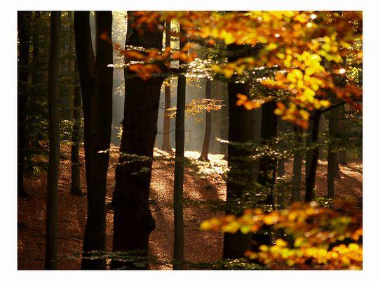 ~HerbstWald~