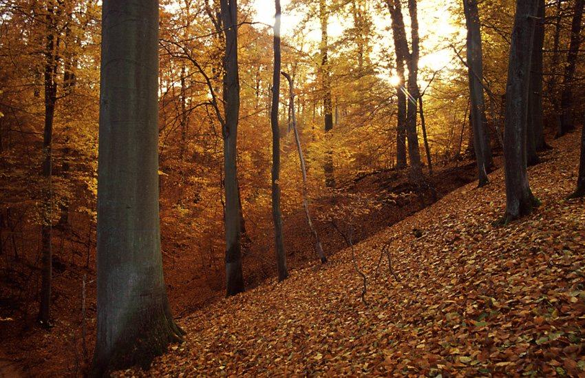Herbstwald am Abend