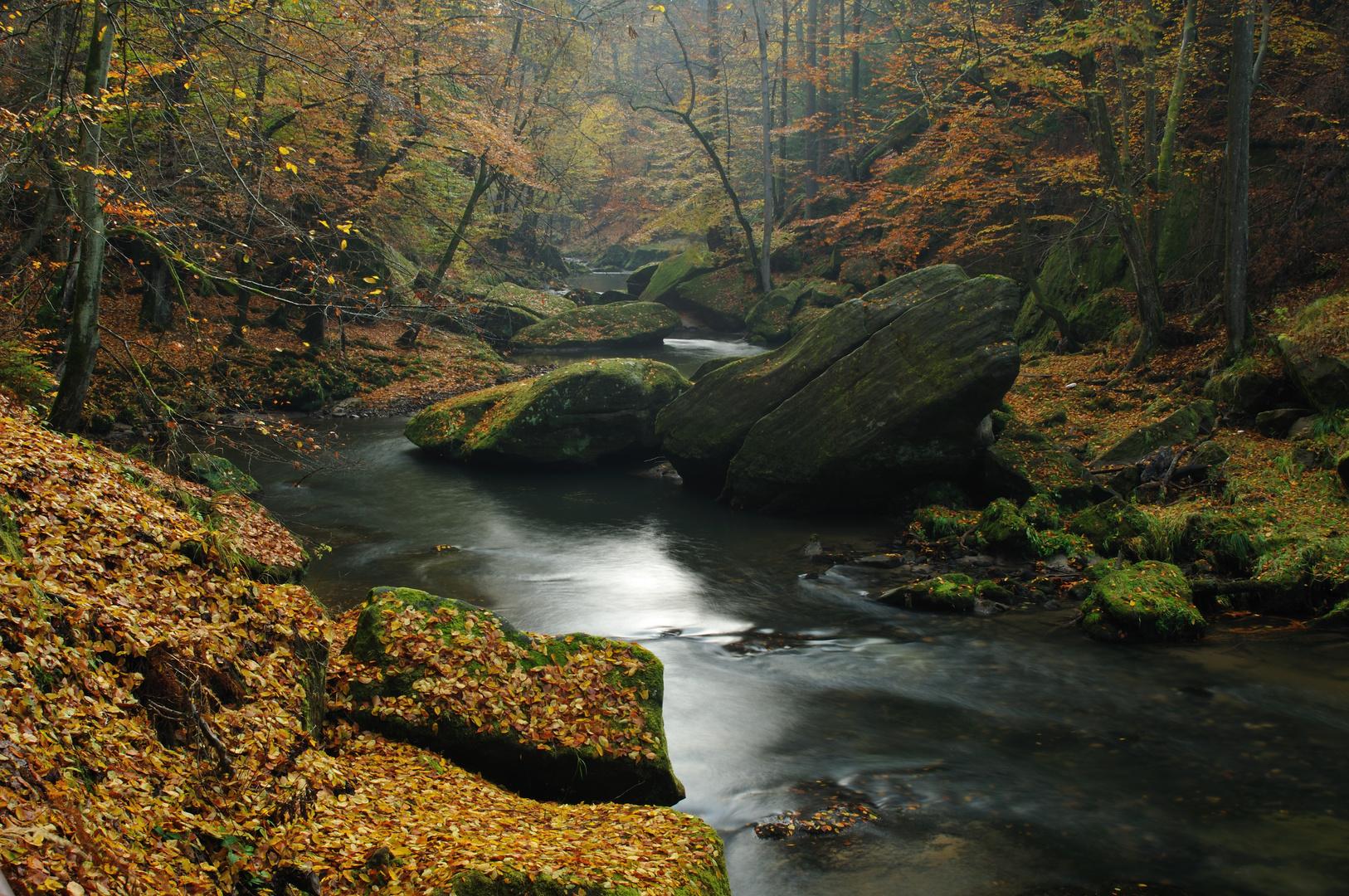 Herbstwald am Edmundsklamm
