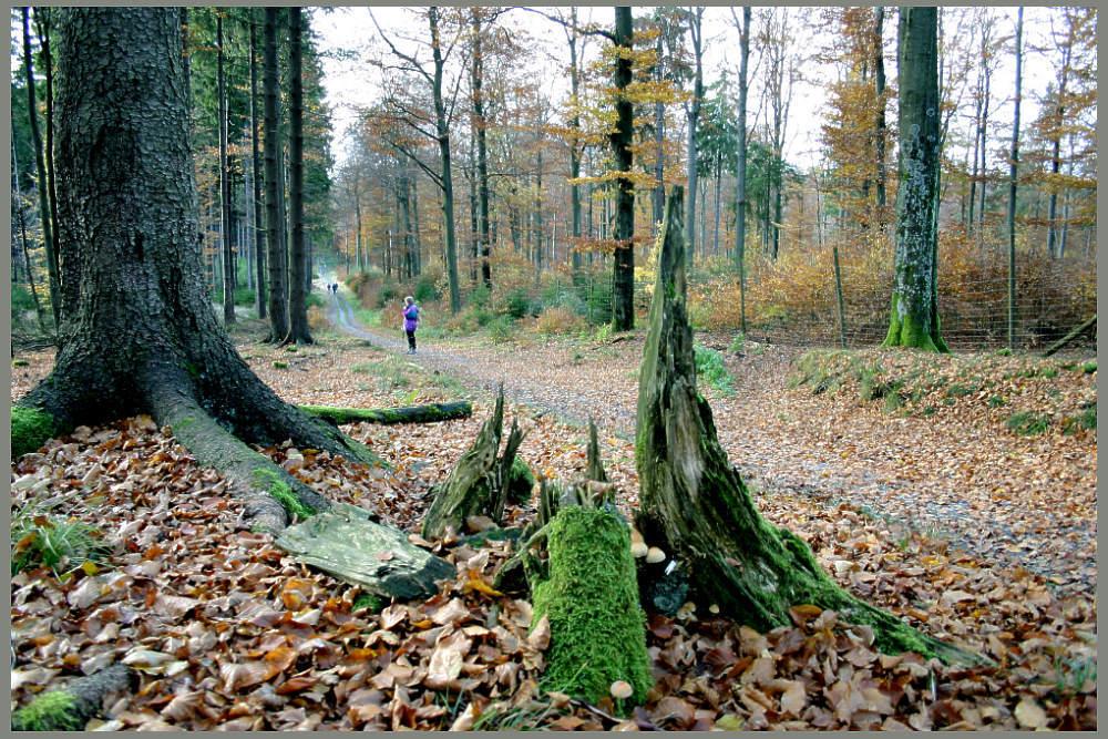 Herbstwald am Rothaarsteig