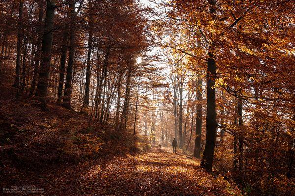 Herbstwald an der Alten Burg (Rothaarkamm/Siegerland)