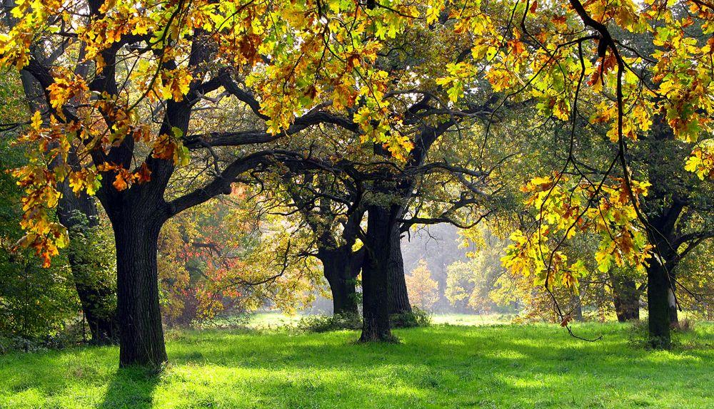 Herbstwald an der Mulde von Hedschie
