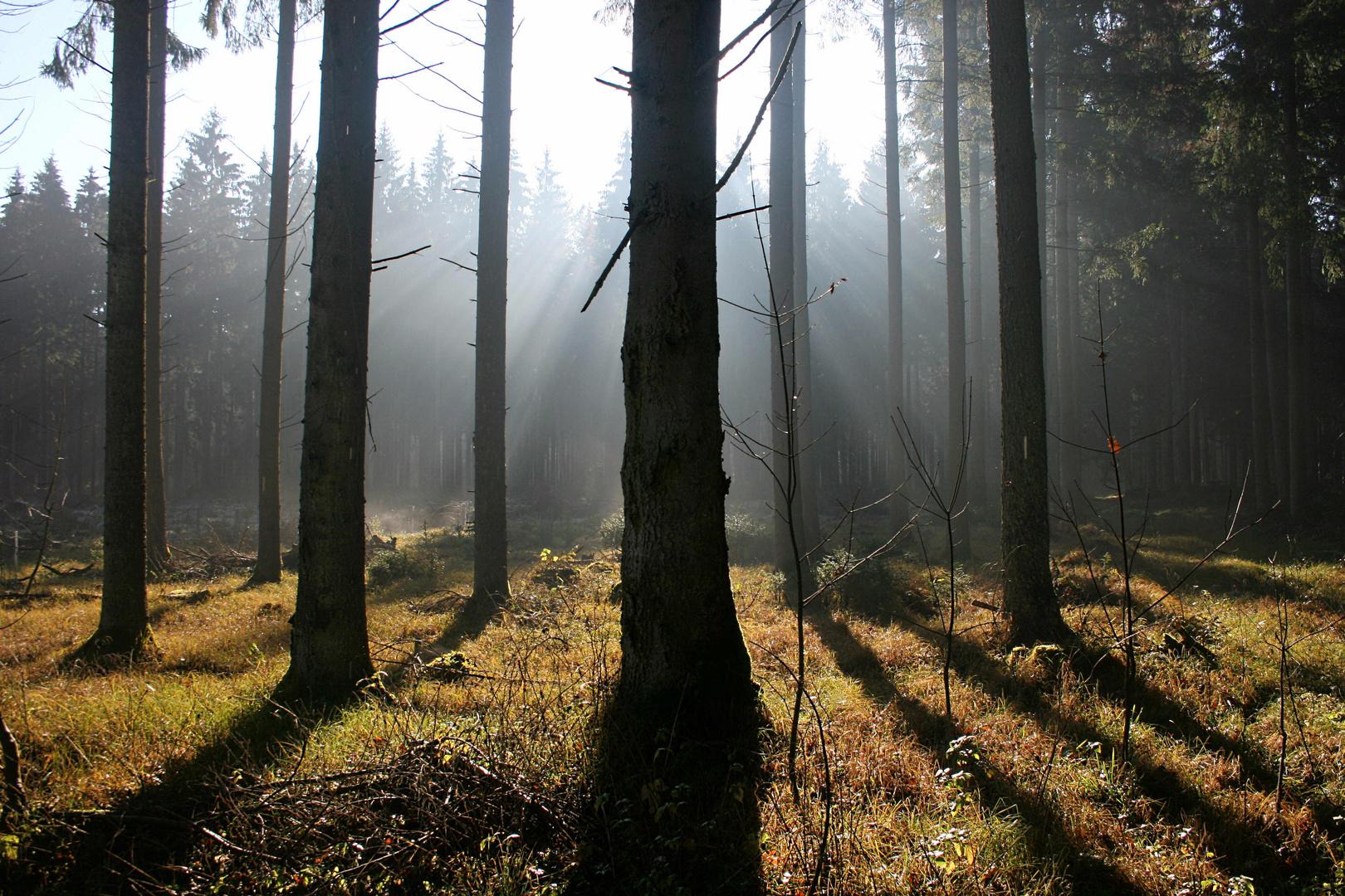 Herbstwald b