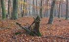 Herbstwald /Bannwald