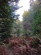 Herbstwald bei Aschaffenburg 2
