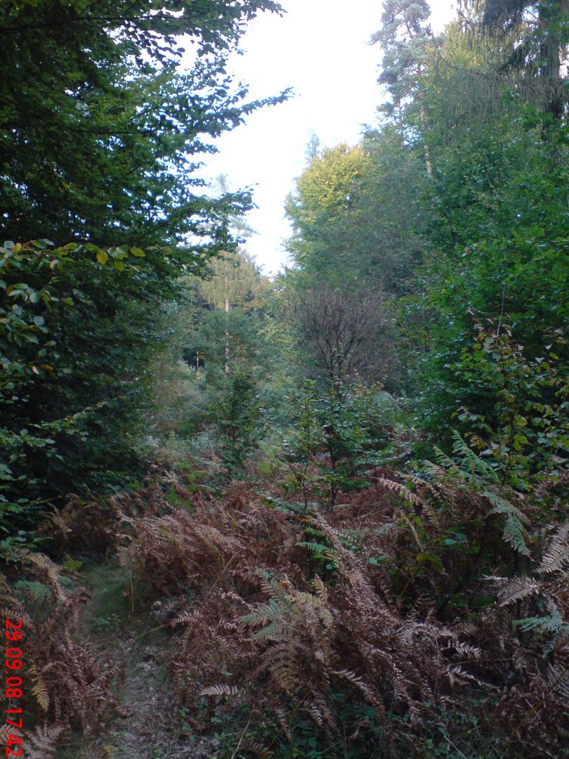 Herbstwald bei Aschaffenburg