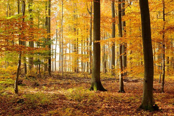 Herbstwald bei Idstein