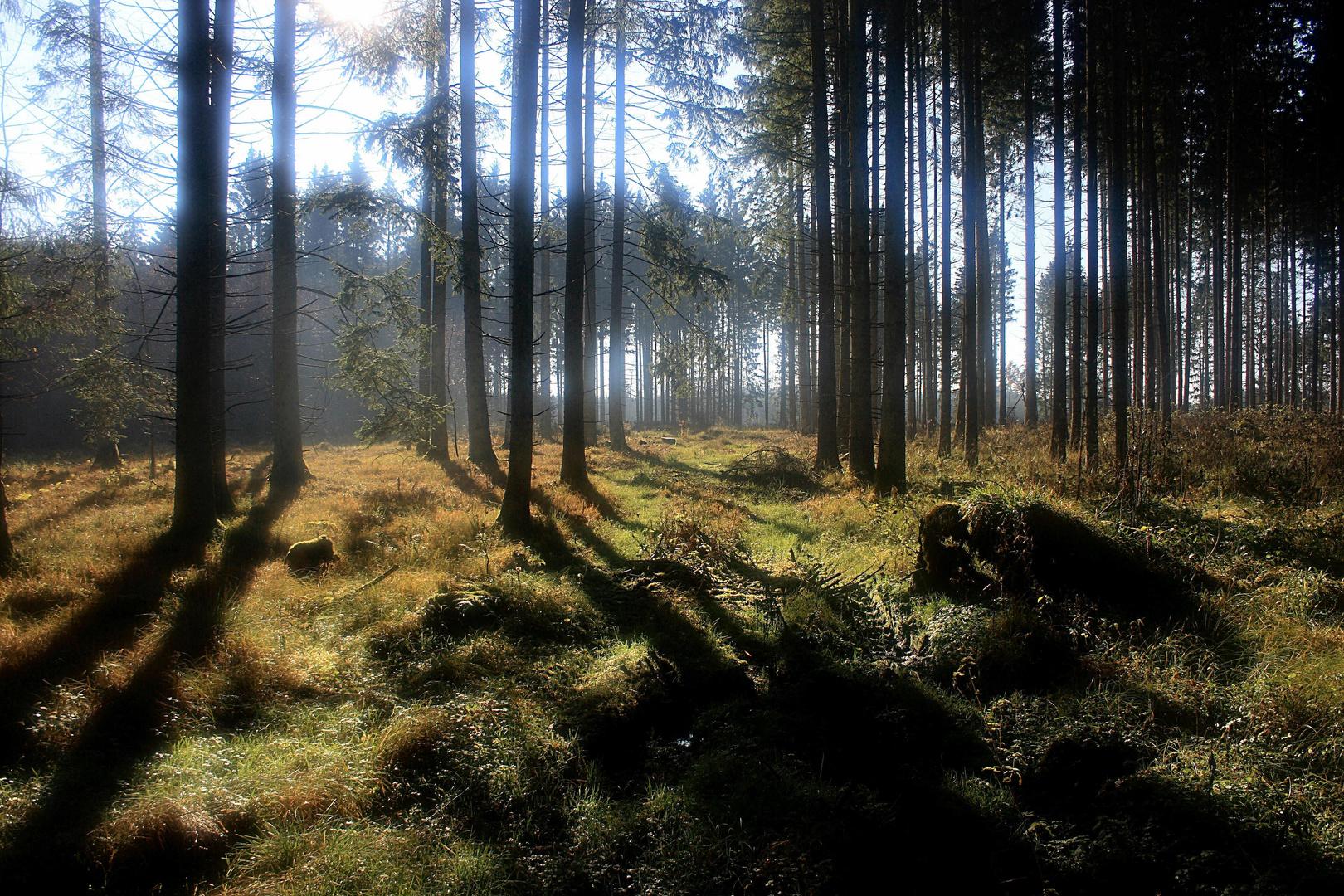 Herbstwald c