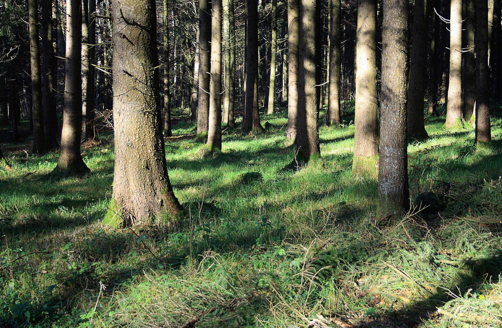 Herbstwald d