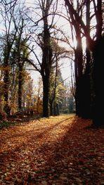 Herbstwald