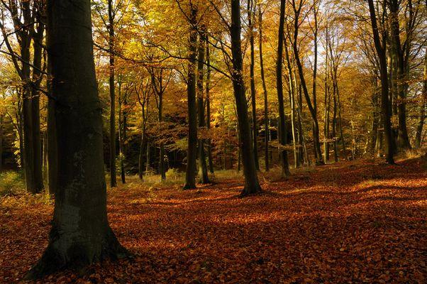 """"""" Herbstwald !"""""""