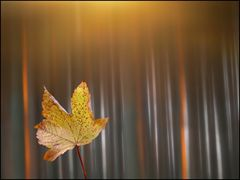 Herbst.Wald