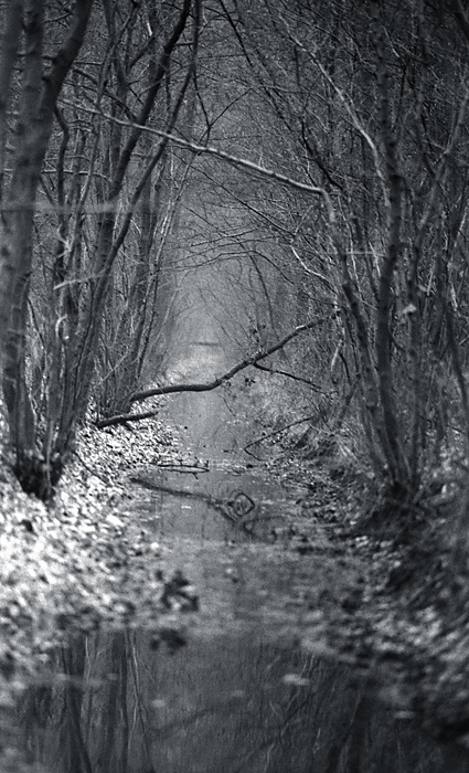 Herbstwald Gewusel