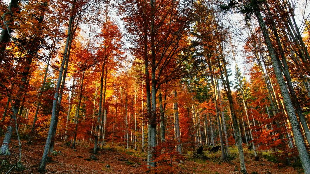 Herbstwald im Bayerischen Wald
