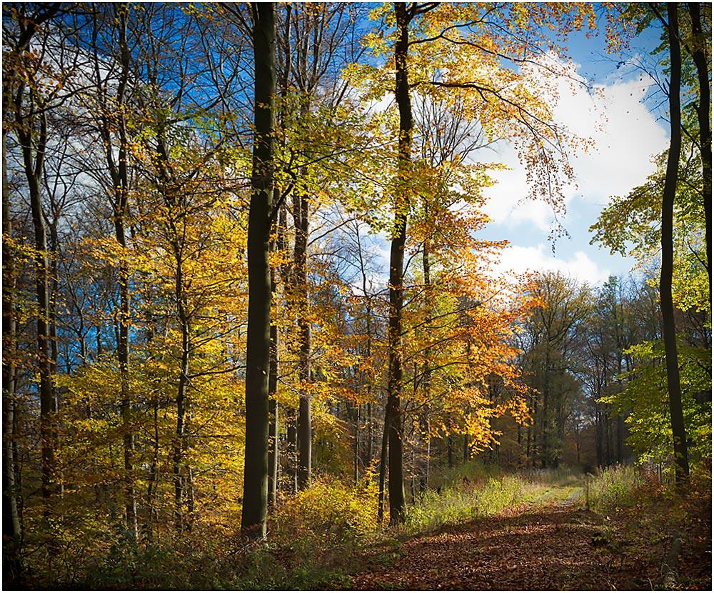 Herbstwald im Goldenen Oktober