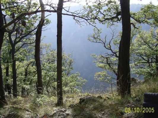 Herbstwald im Harz
