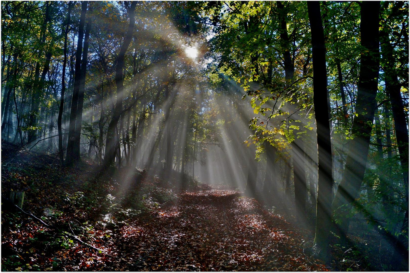 Herbstwald im Nebel.