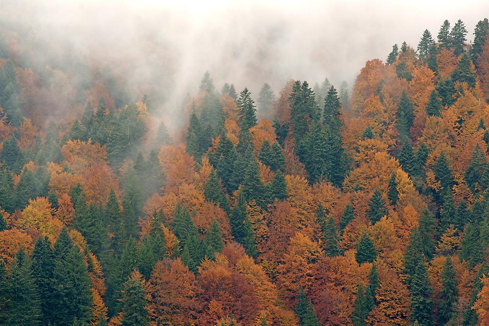 Herbstwald in den Karpaten