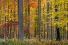 Herbstwald in der Schorfheide