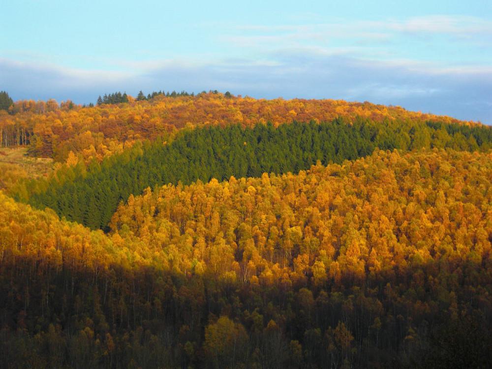 Herbstwald in Herdorf oberhalb San Fernando
