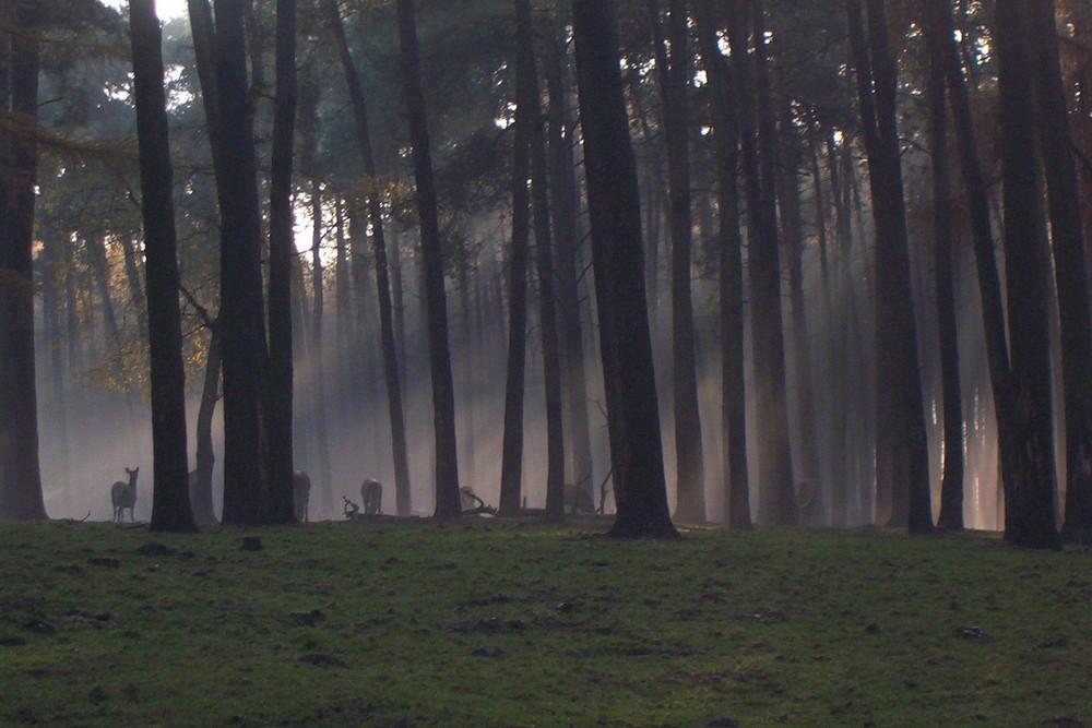 Herbstwald mit Rehen