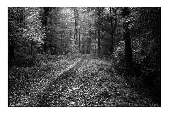 Herbstwald mit Zorki