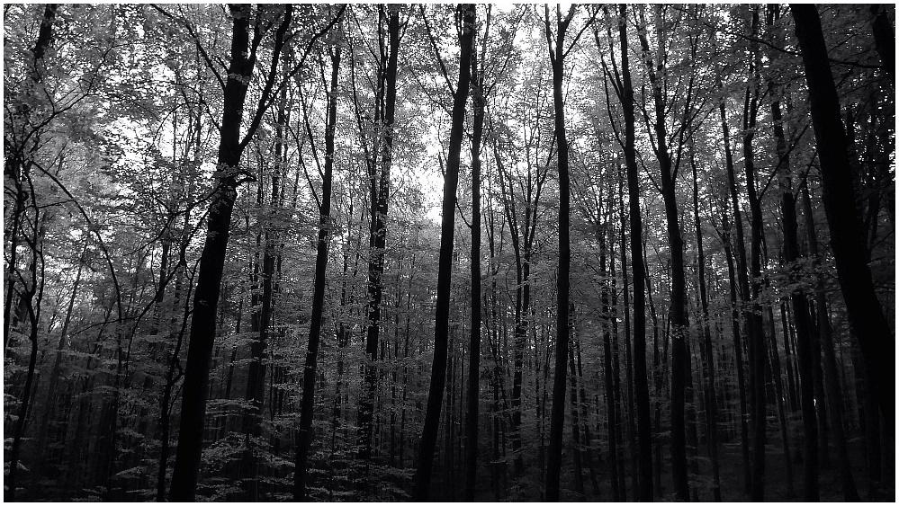 Herbstwald - sw