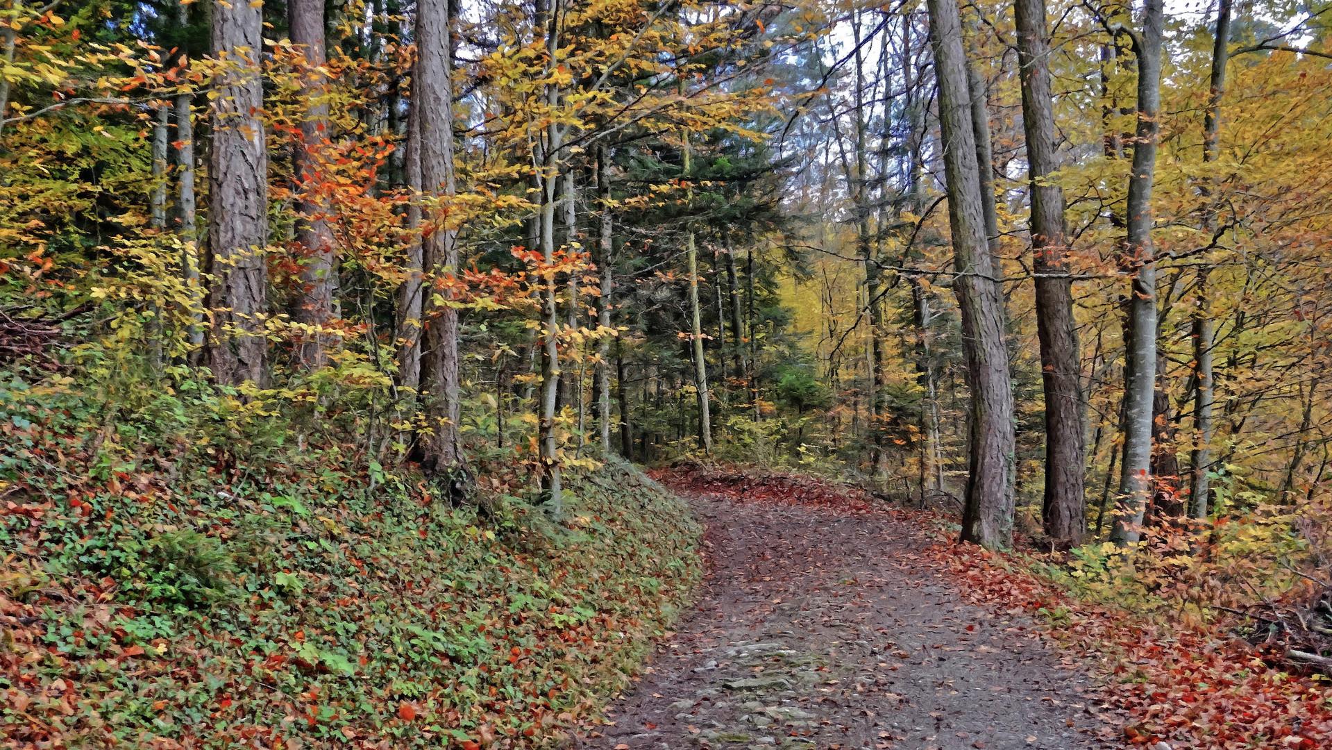 Herbstwald wie gemalt
