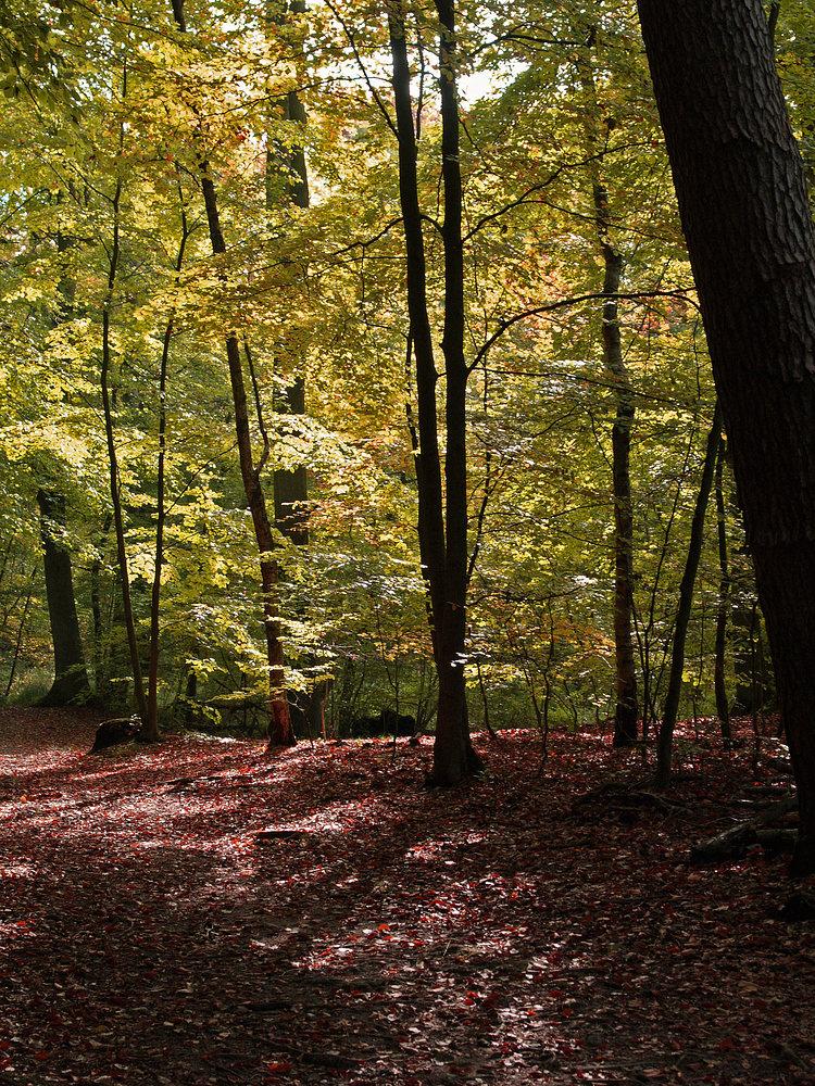 Herbstwald_2