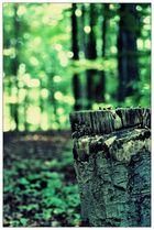 Herbstwaldlichter
