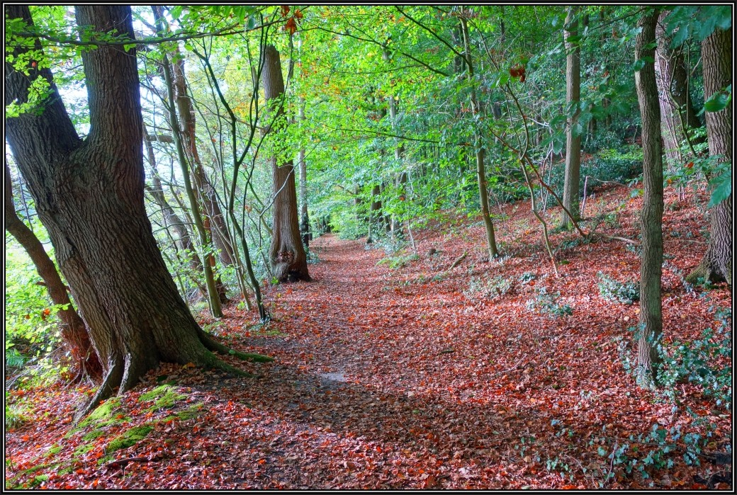 HerbstWaldSpaziergang