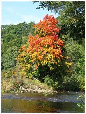 Herbstwanderung 1