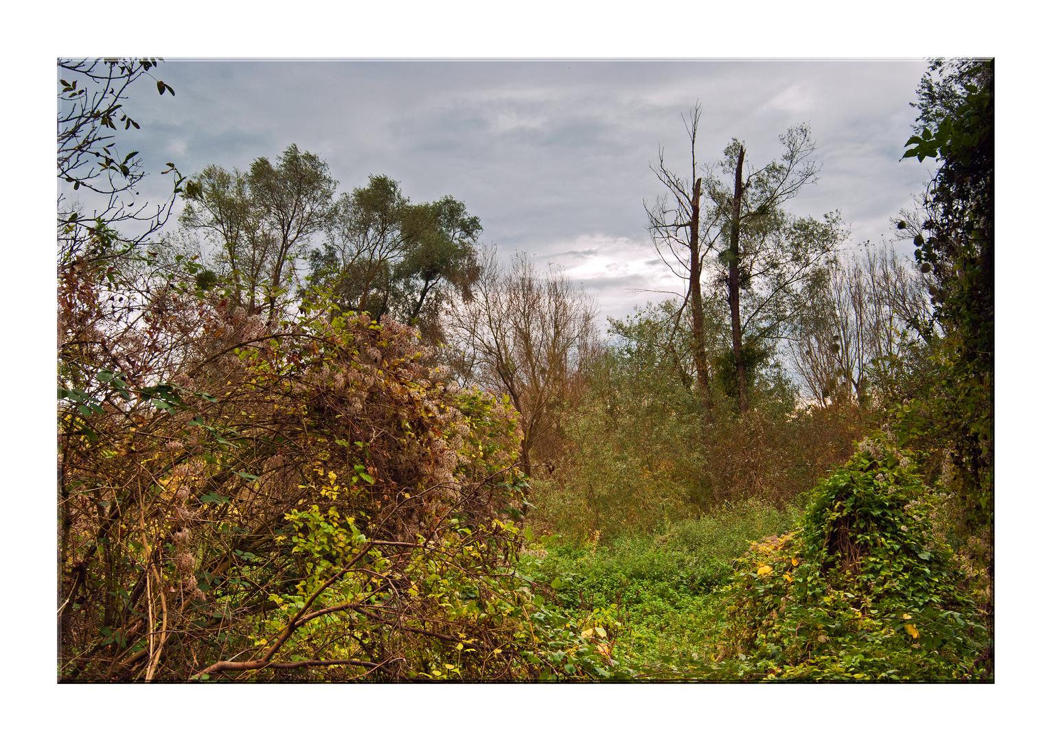 Herbstwanderung auf dem Kühkopf Nr.3