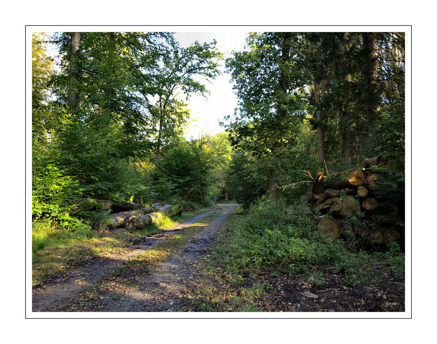 Herbstwanderung nähe Holtheim, Stadt Lichtenau