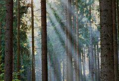 Herbstwanderung- von der Sonne begleitet...