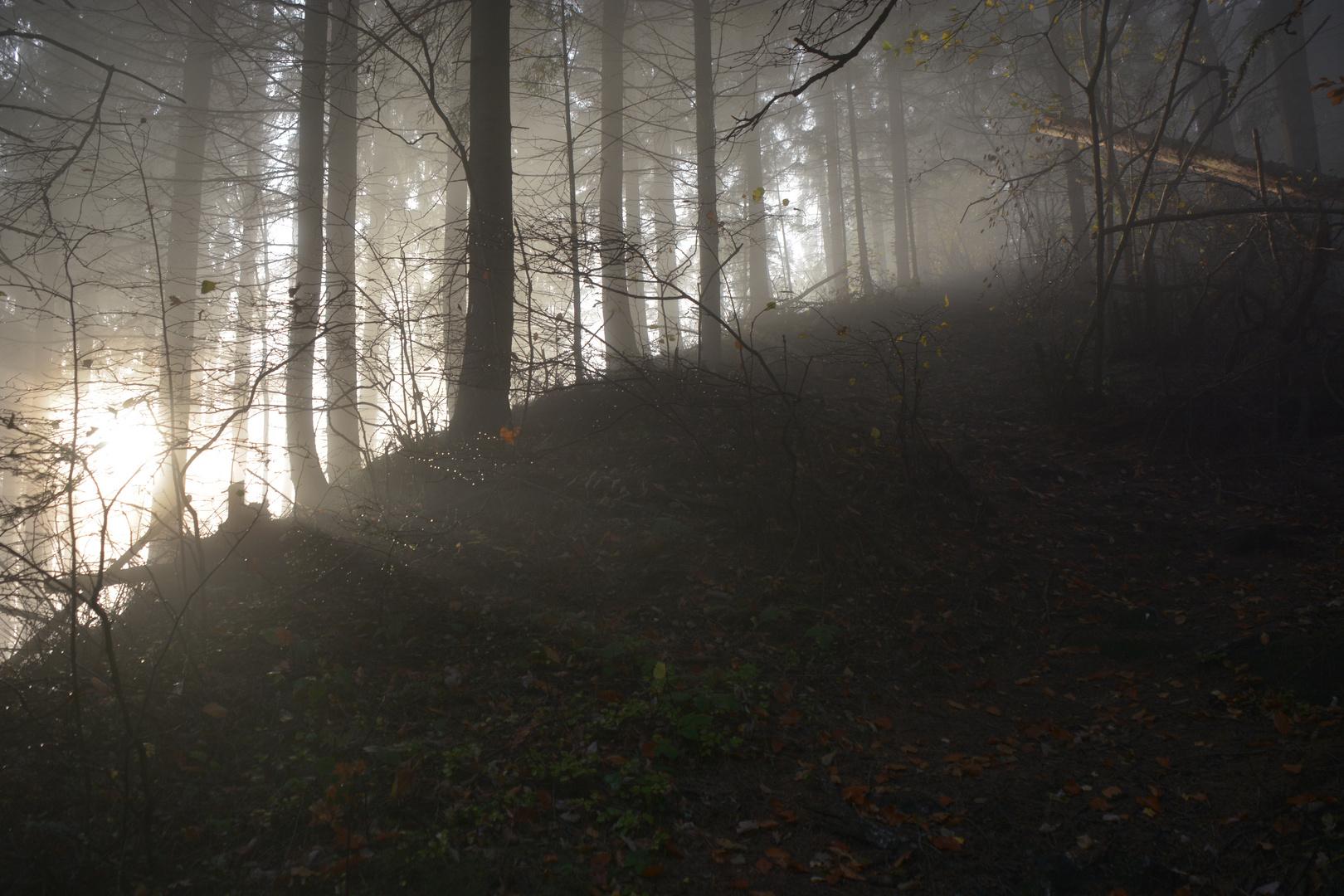 Herbstwanderung4