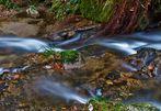 Herbstwasserfarben...(2)