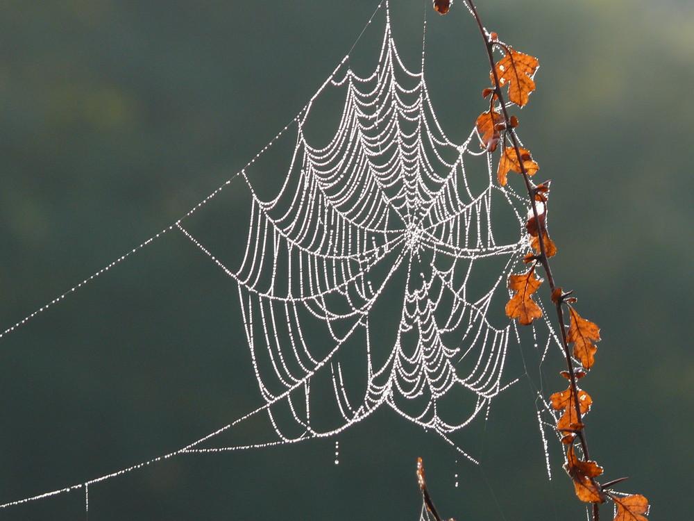 Herbstweben....