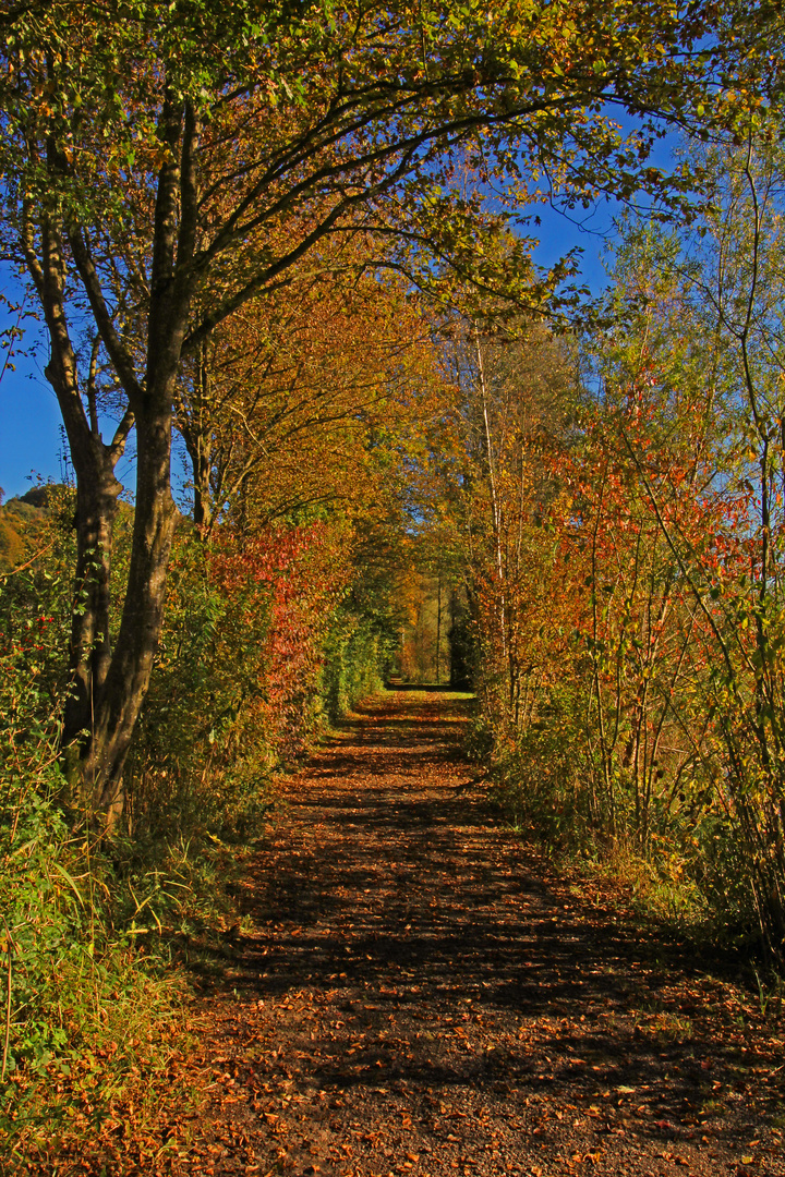 Herbstweg & Spaziergang