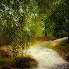 Herbstweg1