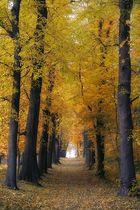 Herbstwege (reload)