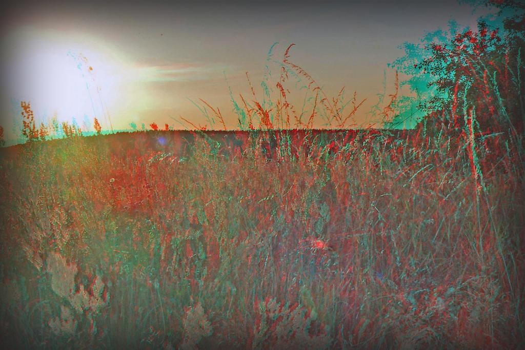 Herbstwiese im Abendlicht